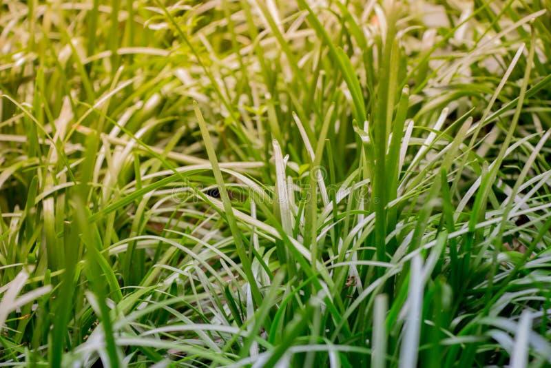 Stillsamt nytt gräs i det ungdom och härlighet för ` s föreställer ett nytt är arkivfoton