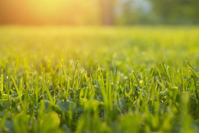 Stillsamt nytt gräs på gräsmatta för orange solnedgång arkivbilder