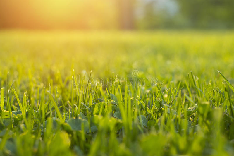 Stillsamt nytt gräs på gräsmatta för orange solnedgång och liv tvingar emotionellt royaltyfria foton