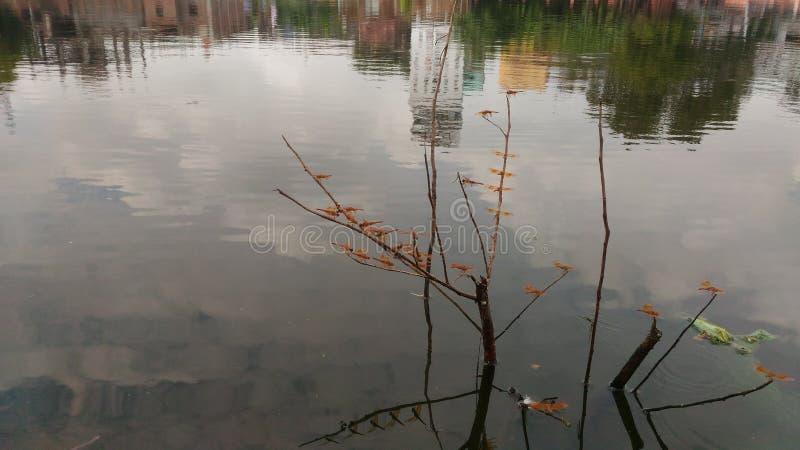 Stillstehende Libellen lizenzfreies stockfoto