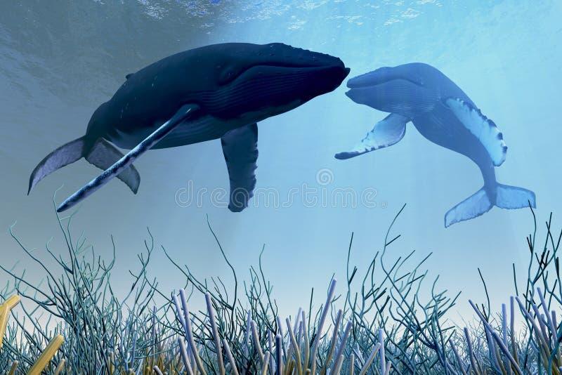 Stillstehende Wale lizenzfreie abbildung