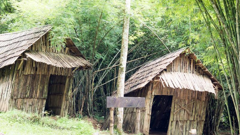 Stilt domowy bambus obraz royalty free