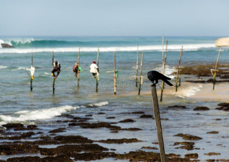 Stilt fishermen in Sri Lanka. Traditional stilt fishermen in Sri Lanka stock images