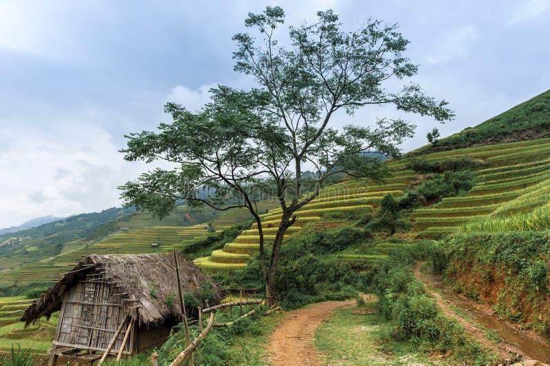 Stilt house with the rice fields