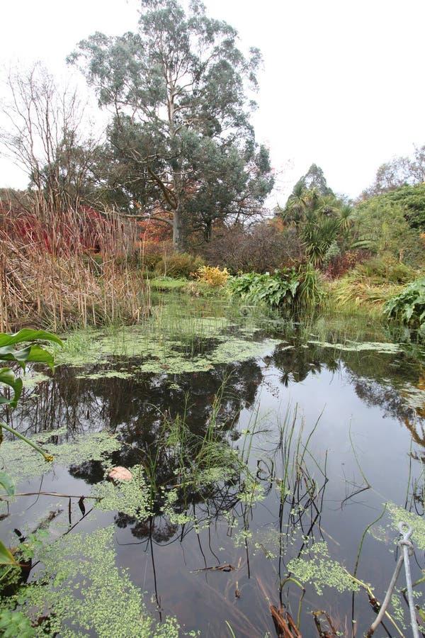 Stilte bij het bosbinnenwater De herfst in Wicklow, Ierland stock foto's