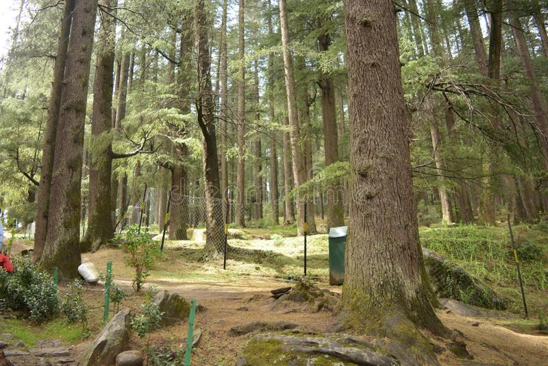 Stilte in het bos royalty-vrije stock afbeelding
