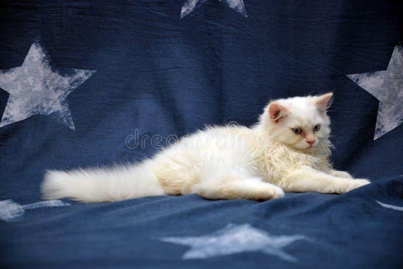 Stilvolle Katze stockfotografie