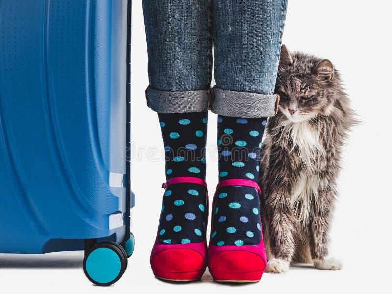 Stilvoller Koffer, die Beine der Frauen und leichtes Kätzchen stockfotos