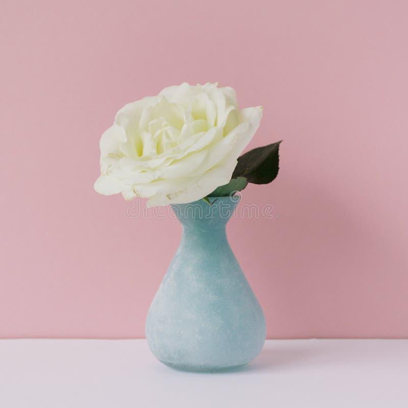 Stilvoller weiblicher Raum mit Weißrose im Vase Angeredetes minimalistic Stillleben lizenzfreie stockbilder