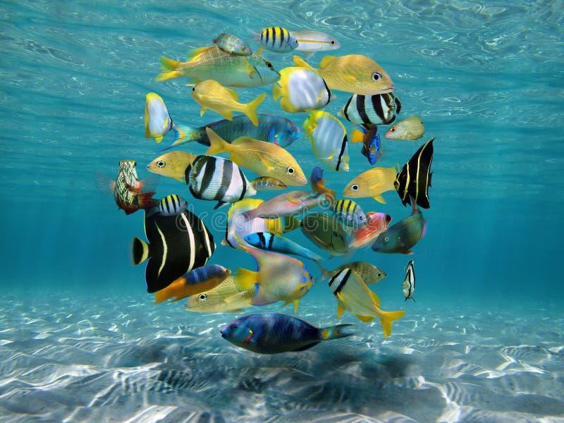 Stim av fisken ovanför en sandig seabed arkivfoto