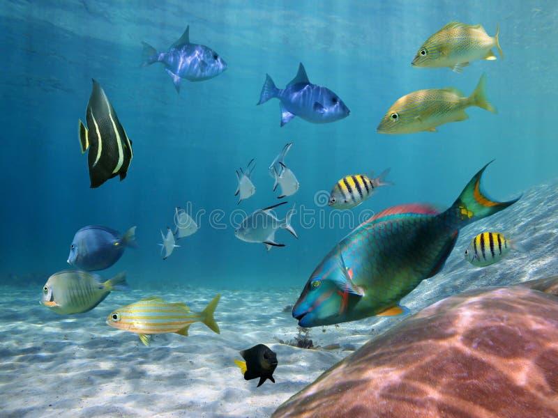 Stim av fisken på en sandig seabed arkivbilder