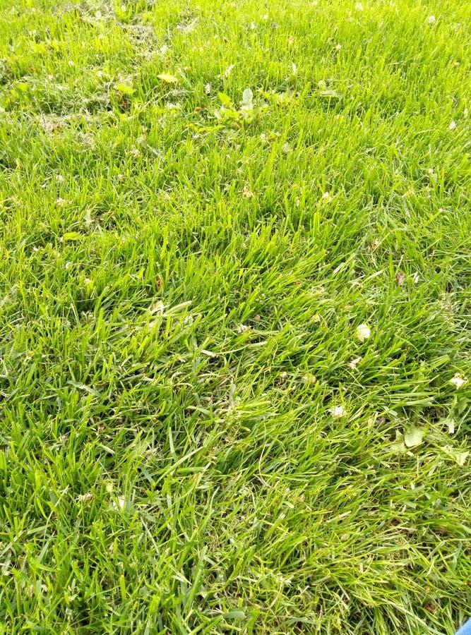 Stimmung des grünen Grases und des Frühlinges des Parks stockfotos