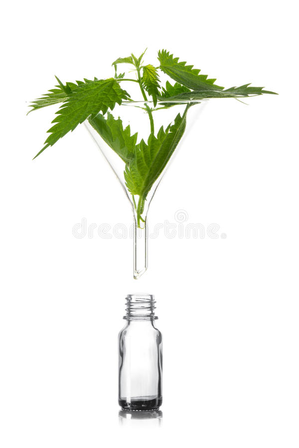 Stinging nettle in a glass funnel above a pharmacy bottle, a med stock photo