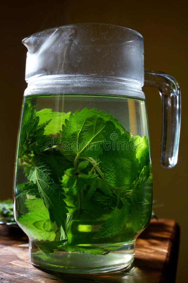 Stinging nettle urtica dioica poured in hot water as herbal tea. Stinging nettle urtica dioica poured in hot water for preparation of herbal tea stock photo