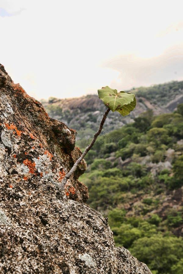 Stinging rocks of the Matopos National Park, Zimbabwe stock images