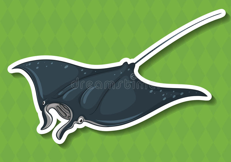 stingray illustration stock