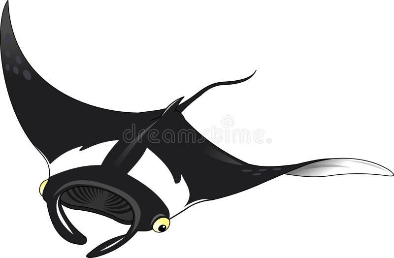 Stingray. Black stingray on white background, and illustration stock illustration