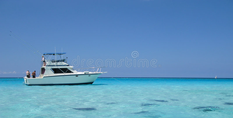 Stingray city, cayman royalty free stock photos
