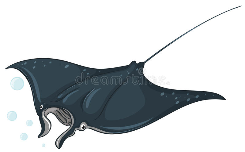 Stingray. Illustration of a close up stingray stock illustration