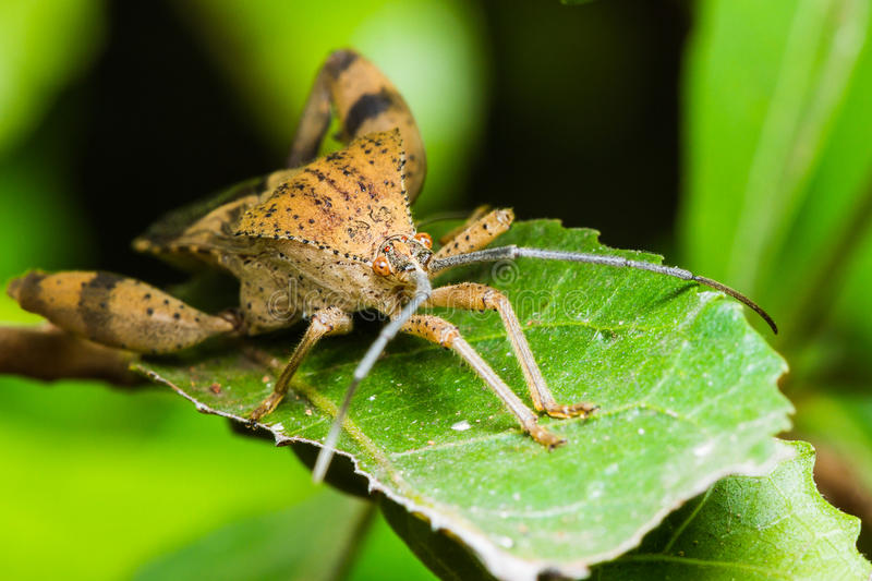 Download Stink bug stock photo. Image of outdoor, green, micro - 29546612
