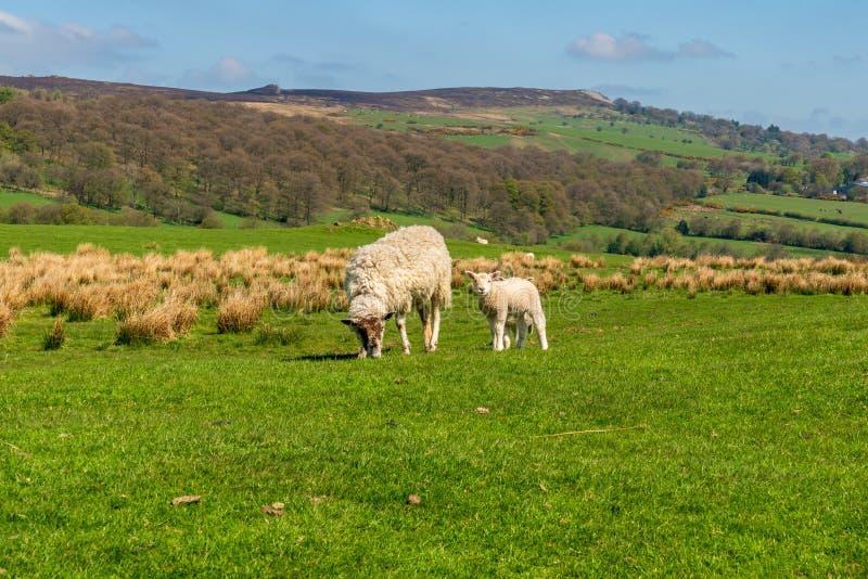 Stiperstones nationell naturreserv, Shropshire, England, UK fotografering för bildbyråer
