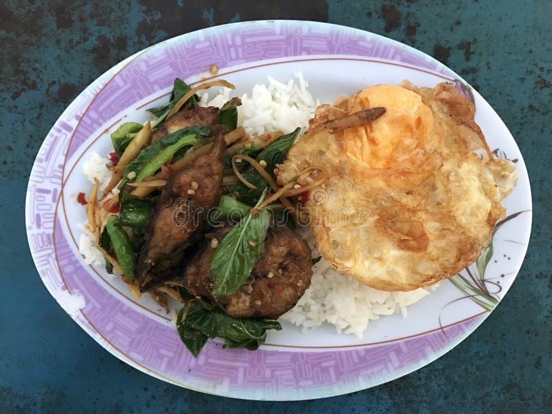 Stir fried catfish, fried egg. Thaifood stock photos