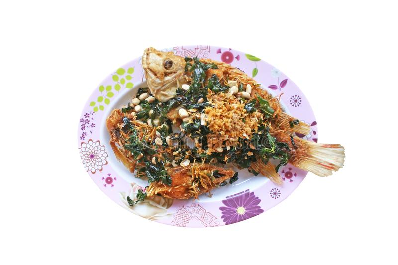 Stir fried deep tilapia with fired crispy herb leaf and peanut royalty free stock photography