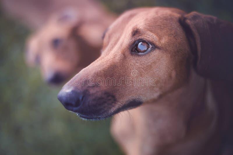 stirra för hund arkivbilder