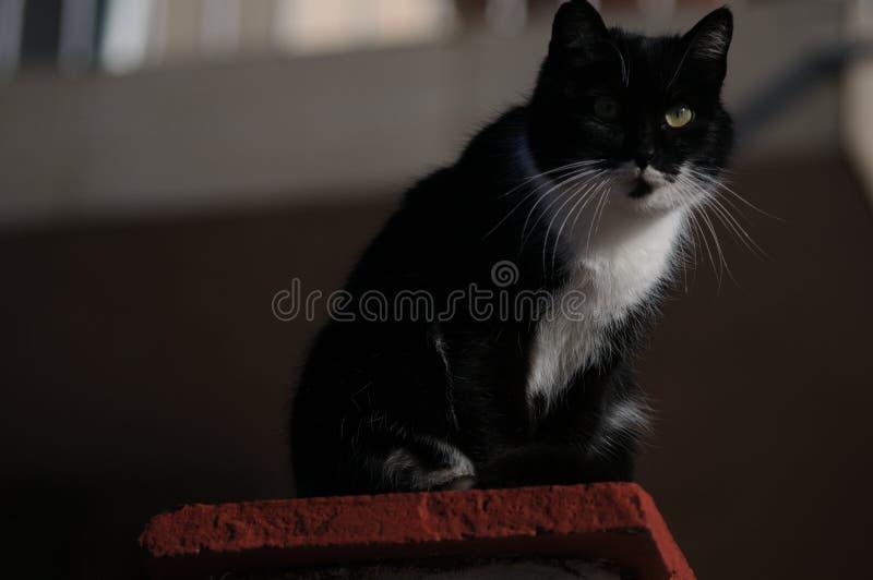Stirra för svart katt som är nyfiket omkring arkivbild