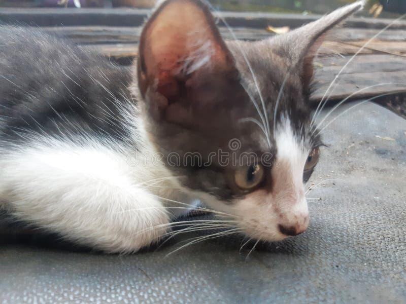Stirra kattungen royaltyfria bilder