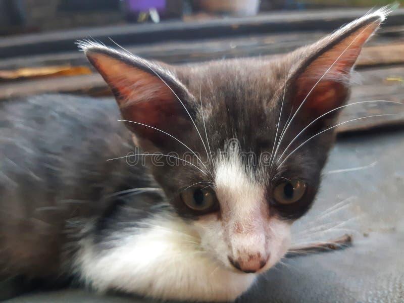 Stirra kattungen arkivbilder