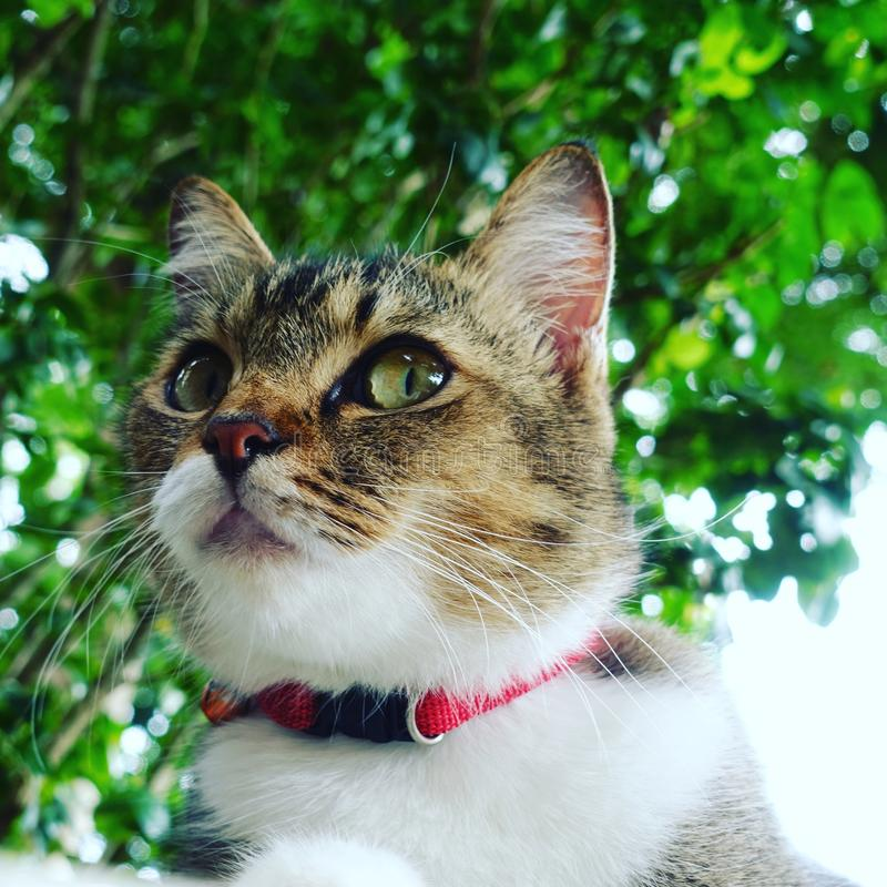 Stirrande av katten royaltyfria bilder