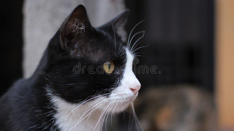 Stirrig katt arkivbilder