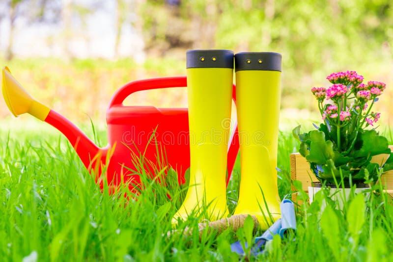 Stivali di gomma gialli, annaffiatoio rosso e strumenti per la piantatura dei fiori su un prato inglese verde immagini stock libere da diritti