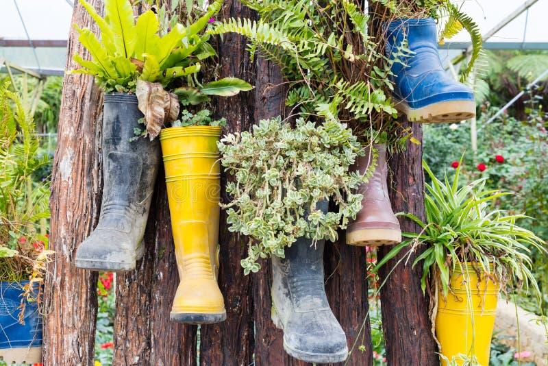 Stivali di gomma riutilizzati con le piante che appendono sull'albero immagine stock libera da diritti