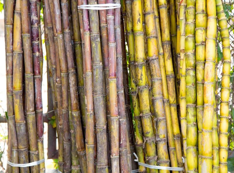 Stjälk av den nya sockerrottingen för utdragning av fruktsaften royaltyfri foto