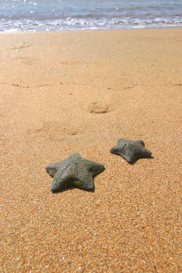 Stjärna För Fisk Ii Royaltyfri Fotografi