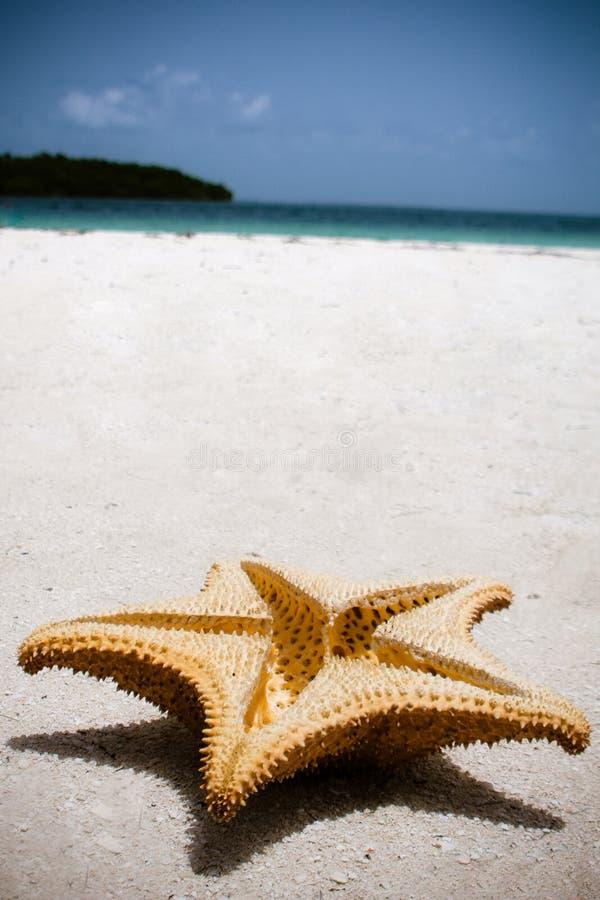Stjärna på stranden royaltyfri bild