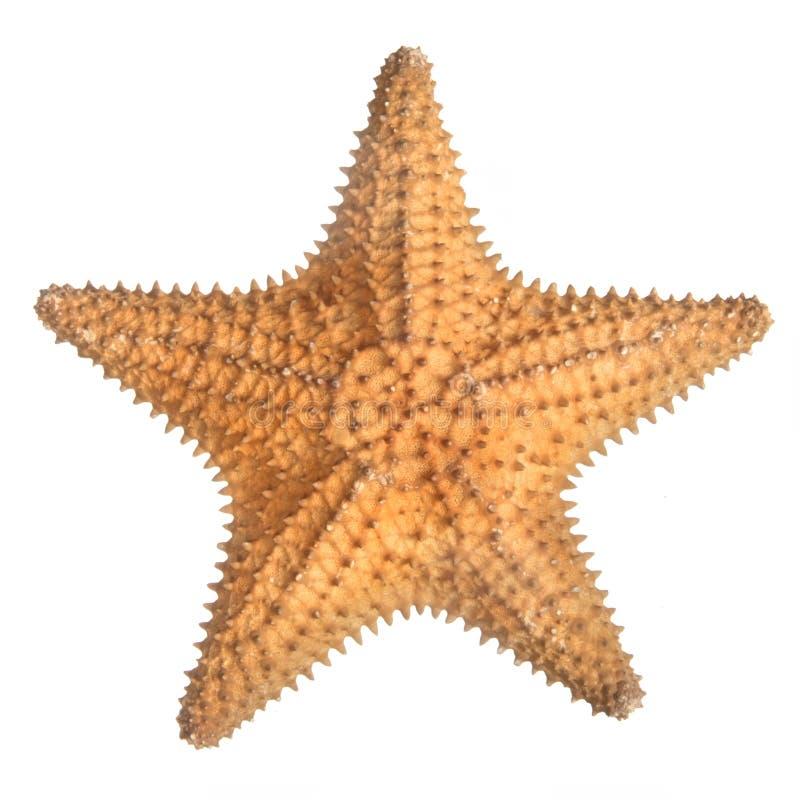 Stjärnafisk royaltyfria foton