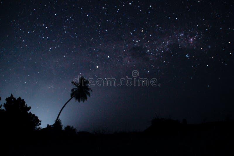 Stjärnklar himmel för natt med många stjärnor och översikterna av palmträd arkivbild
