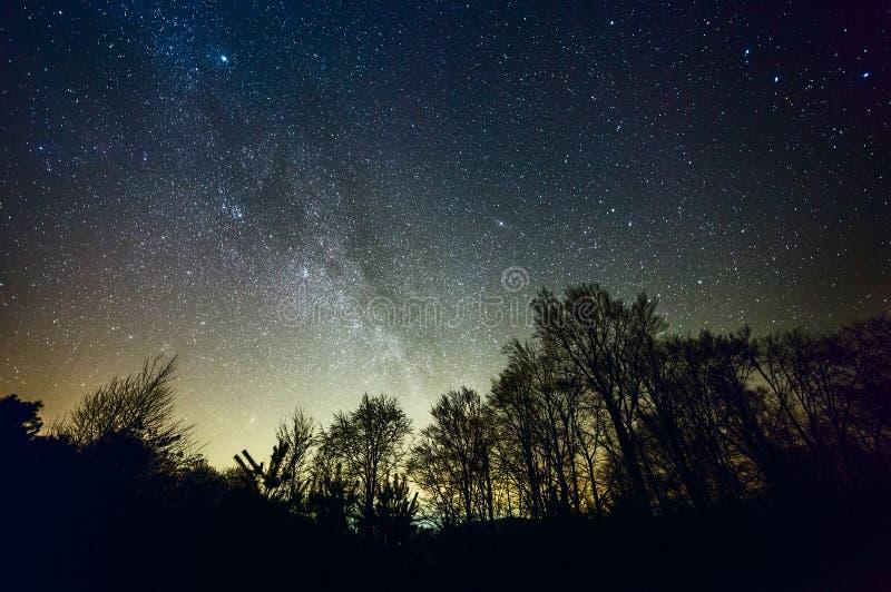 Stjärnklar natt över skog royaltyfria foton