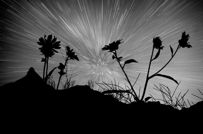 Stjärnklara strimmor och blommakonturer royaltyfri fotografi