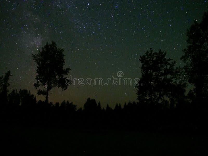 Stjärnor och träd för natthimmel royaltyfria bilder