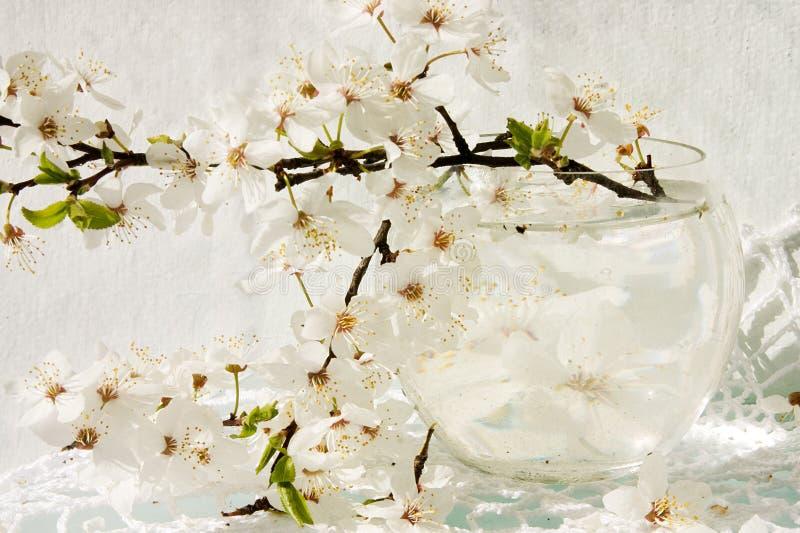 Stll-vida com a árvore de maçã de florescência fotografia de stock