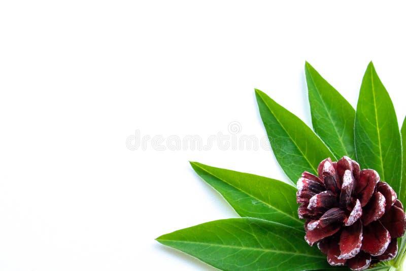 Stoß auf grünen Blättern in der Ecke des Hintergrundes stockfoto