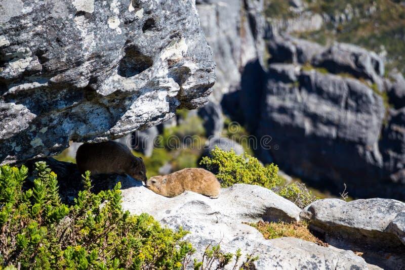 Stołowa góra w Kapsztad obraz royalty free