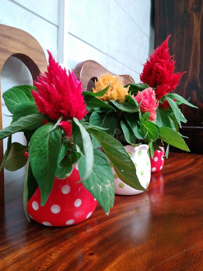 Stołowi kwiatów garnki fotografia royalty free