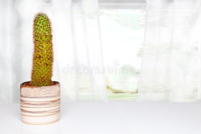 Stołowy wierzchołek na kaktusowym tle Kaktus w dekoracyjnym ceramicznym garnku na białym stole przed abstraktem zamazywał jaskraw obrazy royalty free