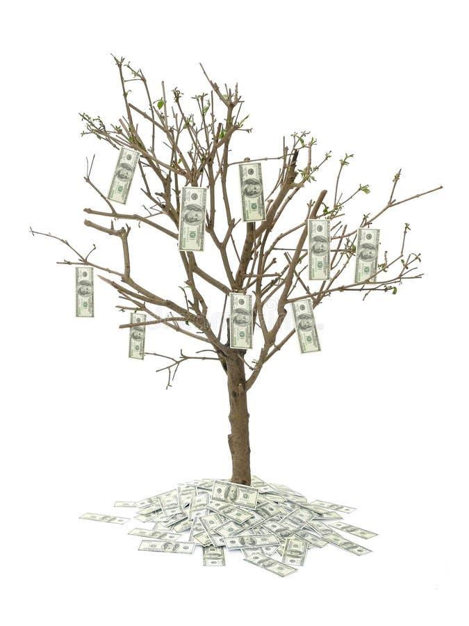 Sto dolar jedno drzewo