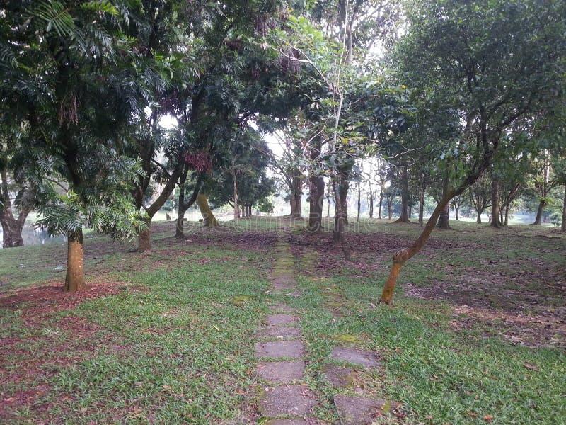 Sto lat drzewnych żyć w parku zdjęcie stock